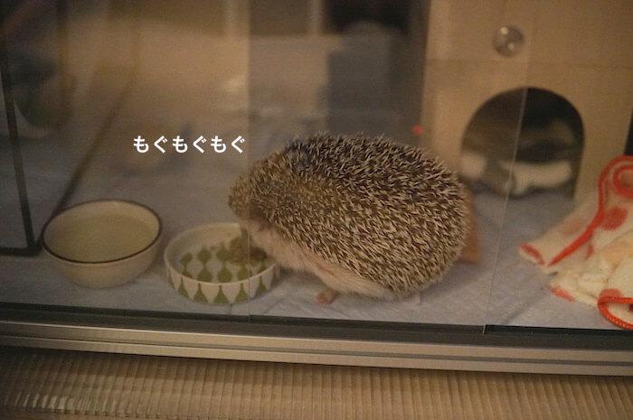 f:id:chikojirou:20170528114033j:plain
