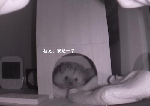 f:id:chikojirou:20170528114102j:plain
