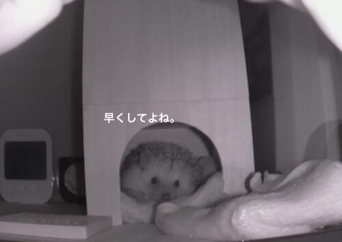 f:id:chikojirou:20170528114116j:plain