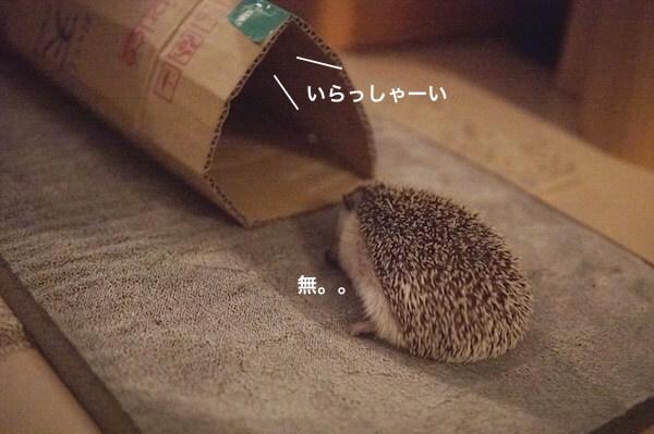 f:id:chikojirou:20170529214906j:plain