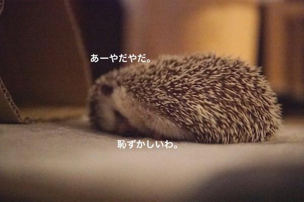 f:id:chikojirou:20170529214943j:plain