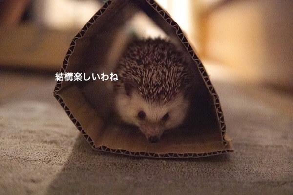 f:id:chikojirou:20170529215158j:plain