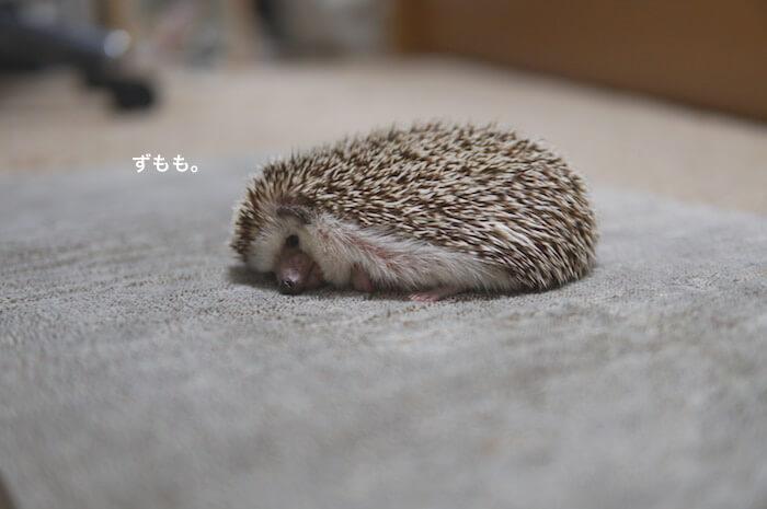 f:id:chikojirou:20170530214105j:plain