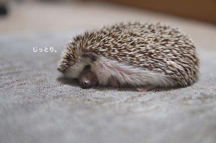 f:id:chikojirou:20170530214121j:plain