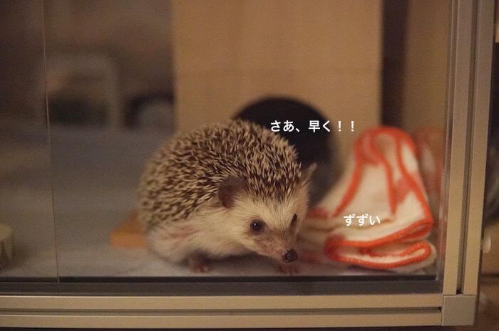 f:id:chikojirou:20170530214341j:plain
