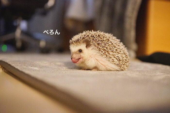 f:id:chikojirou:20170531212343j:plain