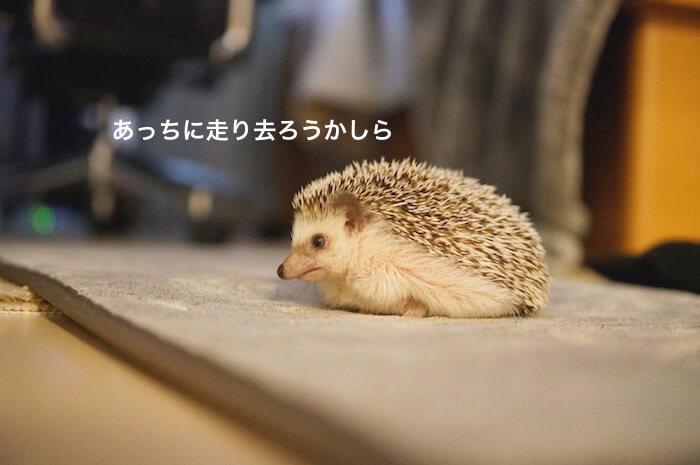 f:id:chikojirou:20170531212412j:plain