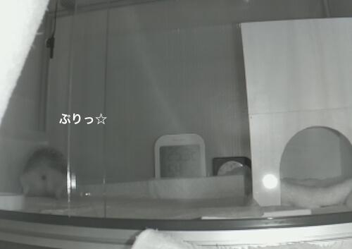 f:id:chikojirou:20170601214311j:plain