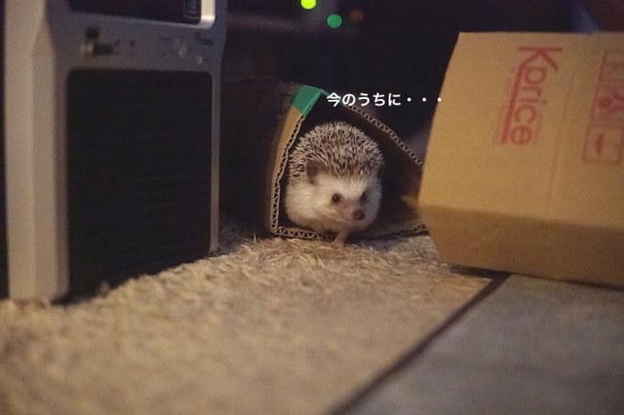 f:id:chikojirou:20170602214031j:plain