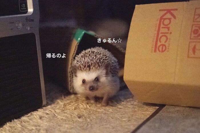 f:id:chikojirou:20170602214137j:plain