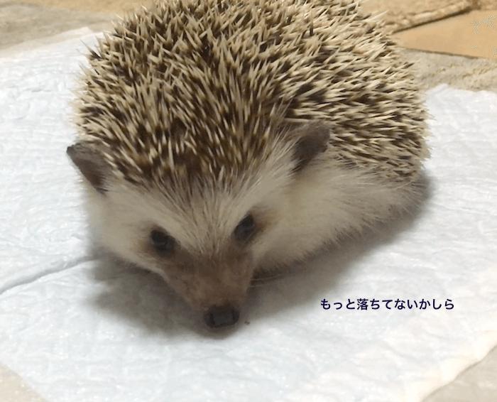 f:id:chikojirou:20170602214304p:plain
