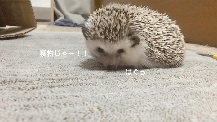 f:id:chikojirou:20170604203140p:plain