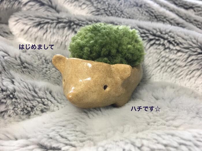 f:id:chikojirou:20170606211311j:plain