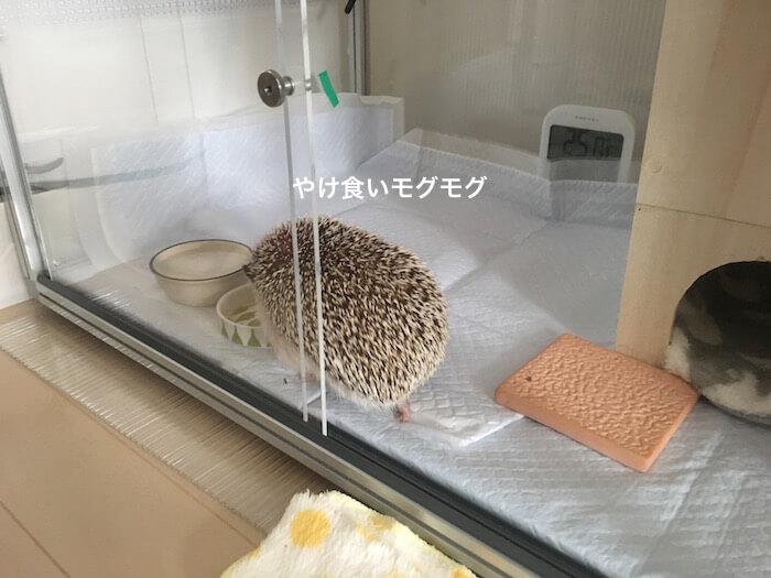 f:id:chikojirou:20170611153509j:plain