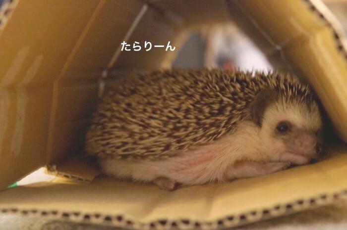f:id:chikojirou:20170612220745j:plain