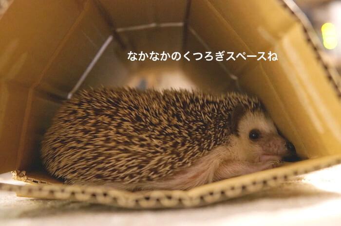 f:id:chikojirou:20170612220800j:plain