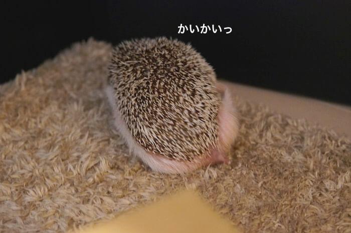 f:id:chikojirou:20170612220855j:plain