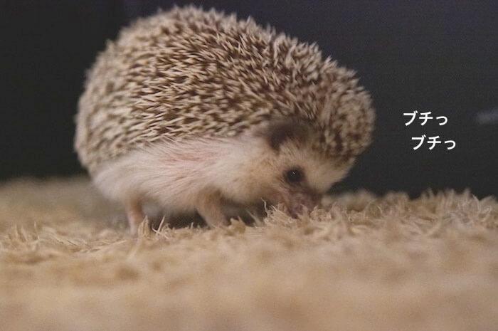 f:id:chikojirou:20170612220933j:plain