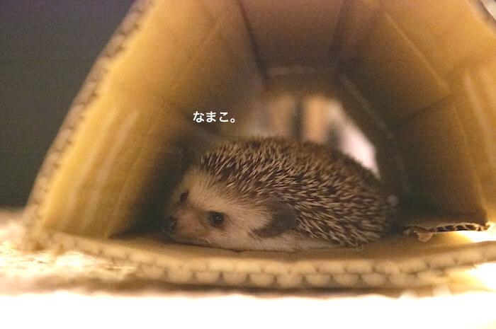 f:id:chikojirou:20170613215417j:plain