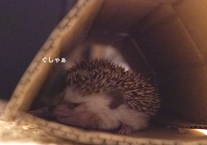 f:id:chikojirou:20170613220139j:plain