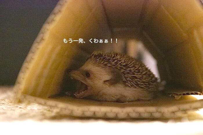 f:id:chikojirou:20170613220208j:plain
