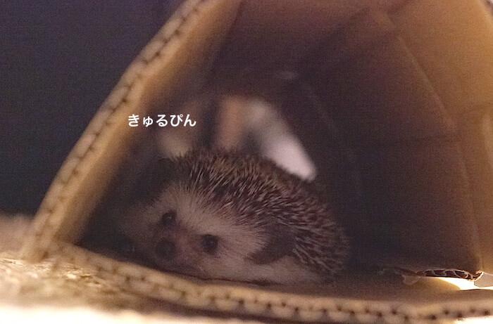 f:id:chikojirou:20170613220325j:plain