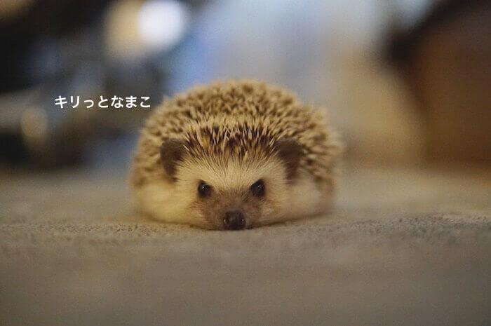 f:id:chikojirou:20170613220408j:plain