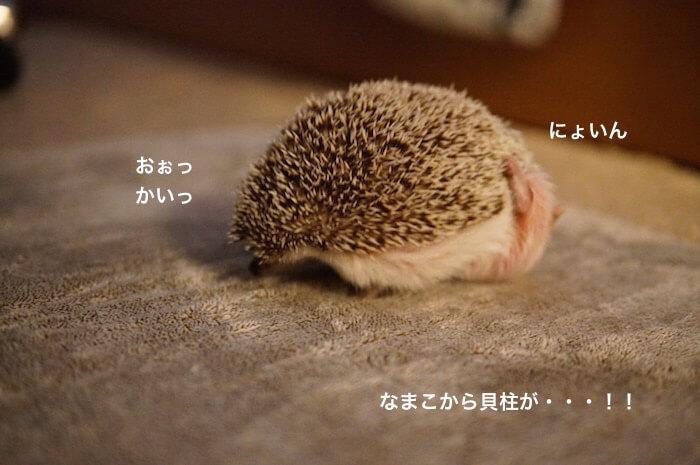 f:id:chikojirou:20170613220424j:plain