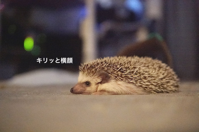 f:id:chikojirou:20170615092351j:plain