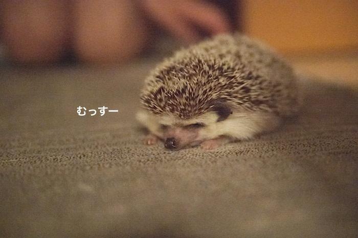 f:id:chikojirou:20170615092439j:plain