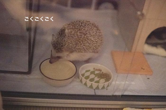 f:id:chikojirou:20170615092451j:plain