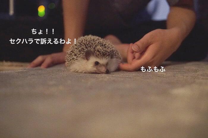 f:id:chikojirou:20170617004049j:plain