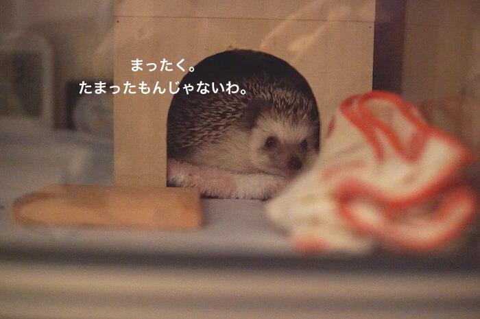 f:id:chikojirou:20170617004115j:plain