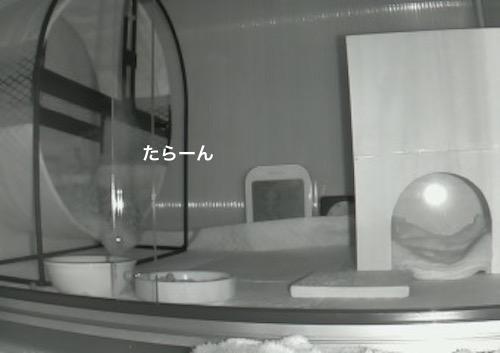 f:id:chikojirou:20170618115328j:plain