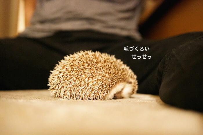 f:id:chikojirou:20170620213005j:plain