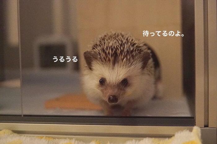 f:id:chikojirou:20170621213508j:plain