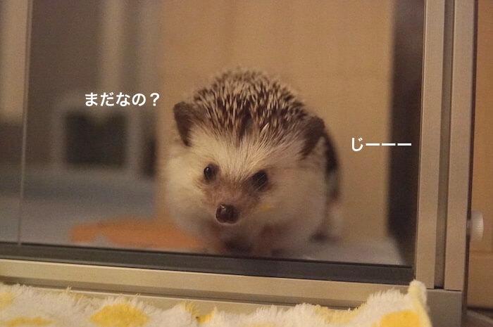 f:id:chikojirou:20170621213522j:plain