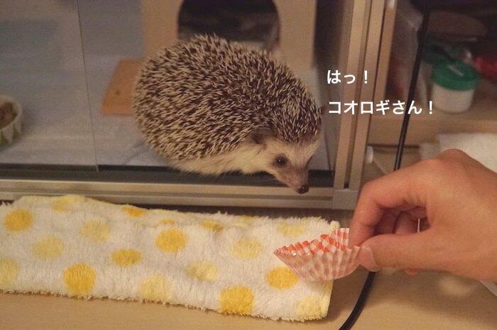 f:id:chikojirou:20170621213602j:plain