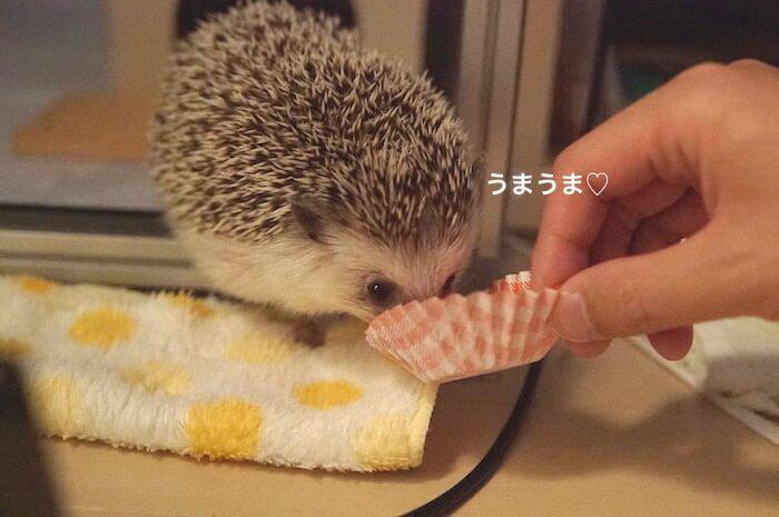f:id:chikojirou:20170621213621j:plain