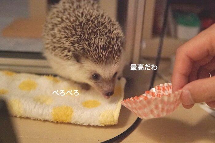f:id:chikojirou:20170621213638j:plain