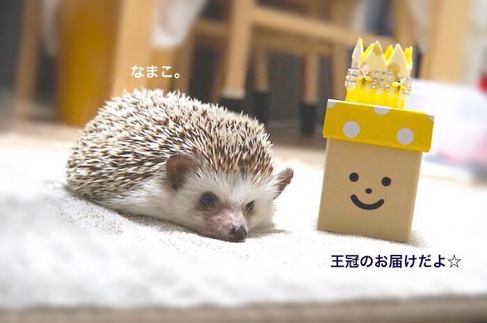 f:id:chikojirou:20170622211604j:plain