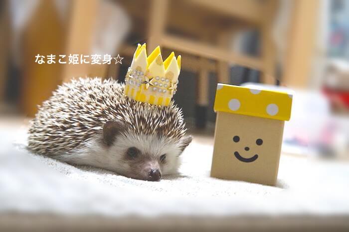 f:id:chikojirou:20170622211614j:plain