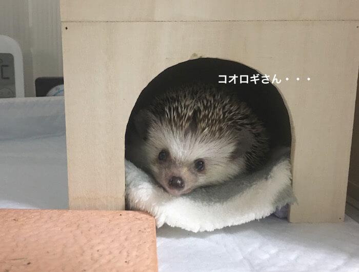 f:id:chikojirou:20170628231528j:plain