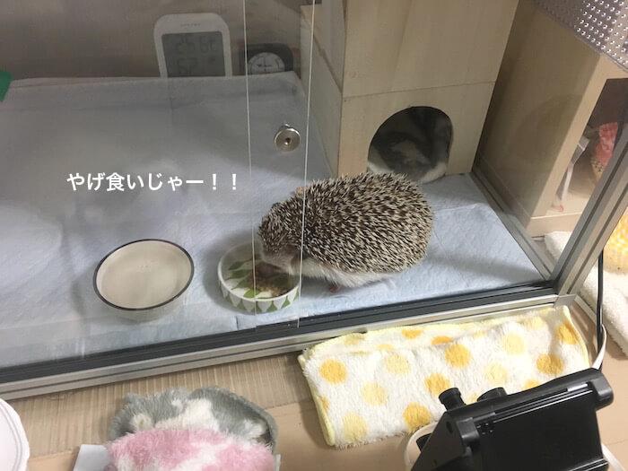 f:id:chikojirou:20170628232753j:plain
