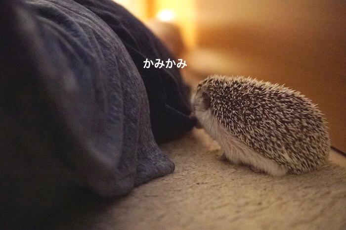 f:id:chikojirou:20170703221554j:plain