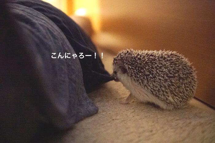 f:id:chikojirou:20170703221605j:plain
