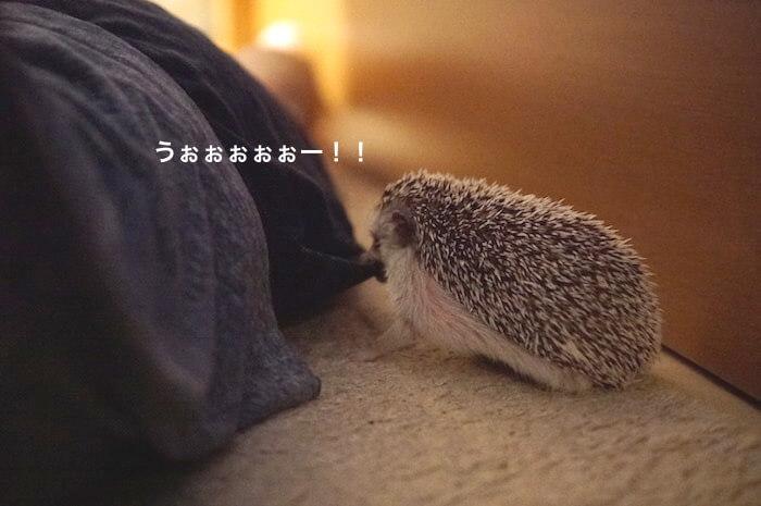 f:id:chikojirou:20170703221617j:plain
