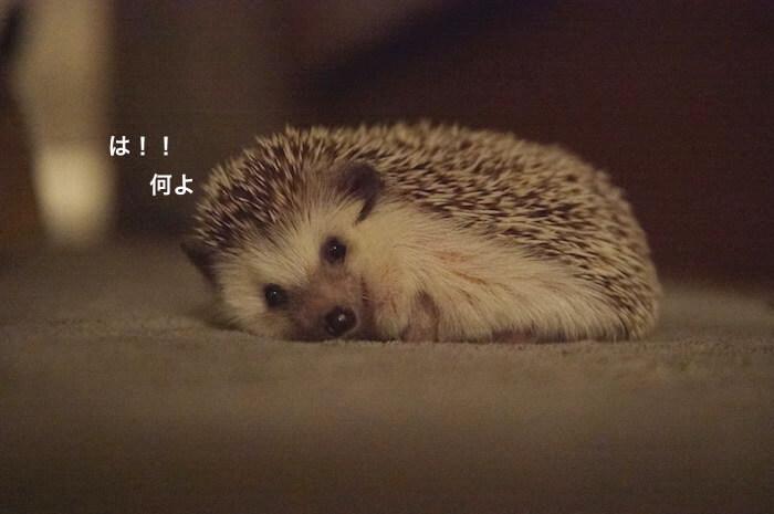 f:id:chikojirou:20170706223229j:plain