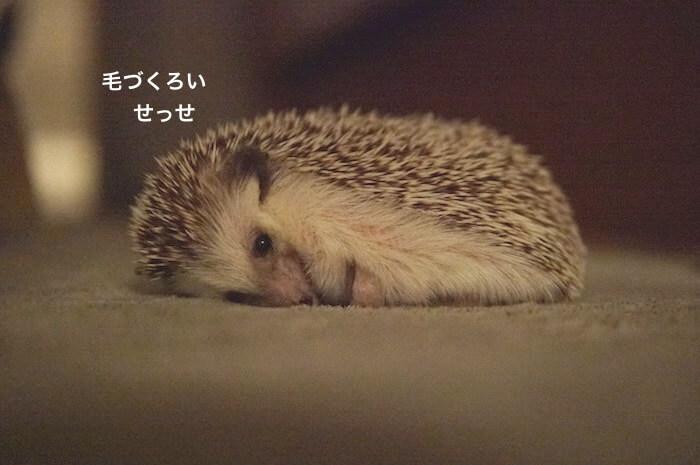 f:id:chikojirou:20170706223240j:plain