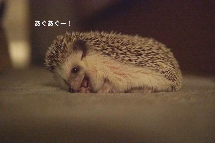 f:id:chikojirou:20170706223308j:plain